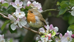 Image result for a bird in a tree