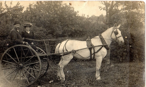 Image result for late 19th century horse and buggy