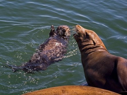Image result for sea lions and otters