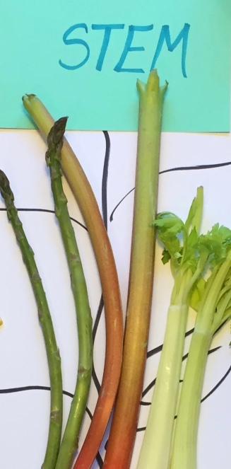 What are 6 parts of the plant that we eat? Stems? Flowers? What ...