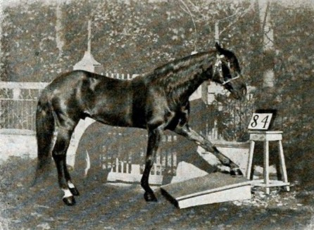 Clever Hans — The Horse That Could Count | by Erik Brown | Lessons from  History | Medium